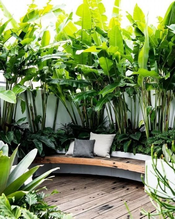 tropical garden backyard inspiration and ideas
